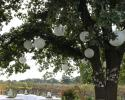 A beautiful glimpse of our vineyard through the boughs of a tree hanging with white wedding decorations.