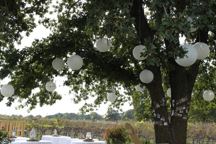 [Image: A beautiful glimpse of our vineyard through the boughs of a tree hanging with white wedding decorations.]